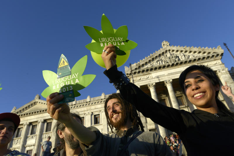 From seed to smoke, Uruguay testing legalized pot