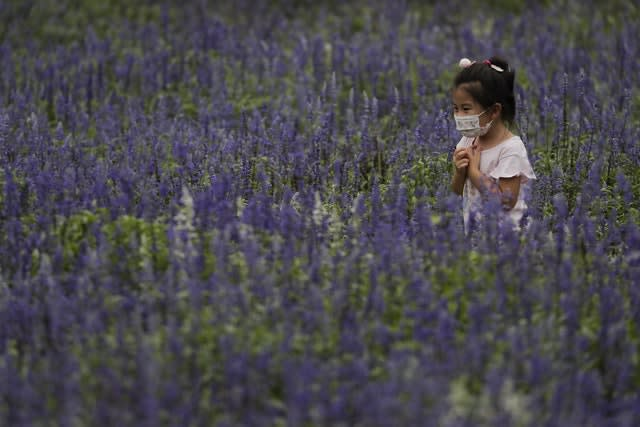 A child wearing a face mask visits the lavender farm in Beijing