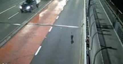 "<p>A swamp wallaby was filmed fleeing cars after it made its way on to the Sydney Harbour Bridge on Tuesday, January 16.</p><p>The male marsupial was eventually rescued on Macquarie Street by <a href=""http://www.abc.net.au/news/2018-01-17/wallaby-on-sydney-harbour-bridge-was-caught-by-nick-farr-jones/9335330"" rel=""nofollow noopener"" target=""_blank"" data-ylk=""slk:former rugby union captain Nick Farr-Jones"" class=""link rapid-noclick-resp"">former rugby union captain Nick Farr-Jones</a> after it successfully evaded police on the bridge. It was <a href=""https://newswire.storyful.com/storylines/*/stories/192498?referred_from=Australia&channel_id=222&context=channel&referrer_type=Channel&referrer_id=222"" rel=""nofollow noopener"" target=""_blank"" data-ylk=""slk:taken to Taronga Zoo"" class=""link rapid-noclick-resp"">taken to Taronga Zoo</a>.</p><p><a href=""https://www.facebook.com/tarongazoo/photos/a.111944215535145.15994.110584599004440/1729096983819852/?type=3&theater"" rel=""nofollow noopener"" target=""_blank"" data-ylk=""slk:On its Facebook page"" class=""link rapid-noclick-resp"">On its Facebook page</a> the zoo quoted senior veterinarian Larry Vogelnest as saying the swamp wallaby was in stable condition. ""At this stage, it doesn't appear to have any serious injuries, however, it will be carefully assessed over the next 24–48 hours. As with all wildlife brought into our care, our hope is that the wallaby will be able to be released back into the wild. An assessment will be made on the best location for this release in due course."" Credit: Melinda Pavey via Storyful</p>"