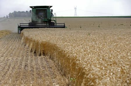 A combine drives over stalks of soft red winter wheat during the harvest on a farm in Dixon, Illinois, in this July 16, 2013 file photo. REUTERS/Jim Young/Files