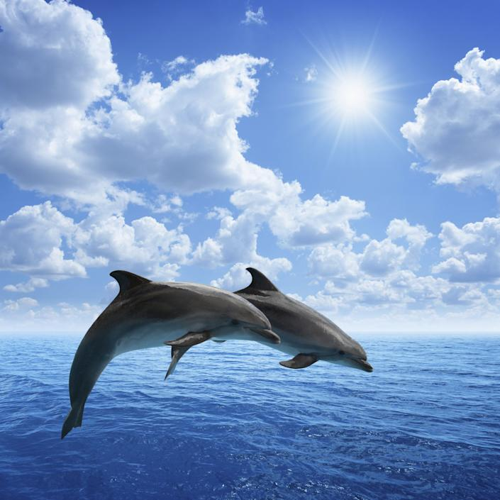 Two jumping dolphins, blue sea and sky, white clouds, bright sun.