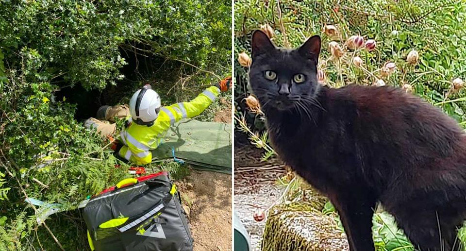 Piran the cat is pictured along with a rescuer going down an embankment.