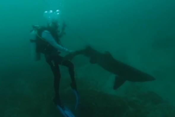 Video: SeaWorld divers rescue shark with hook lodged in its mouth