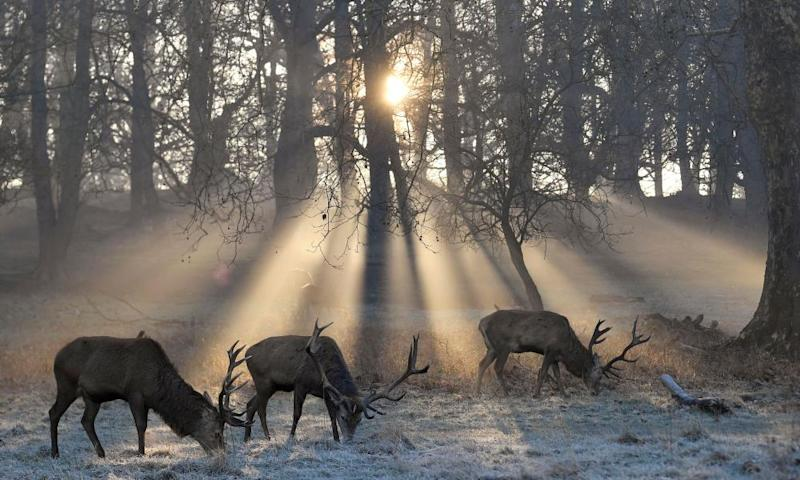 Richmond Park is a national nature reserve.