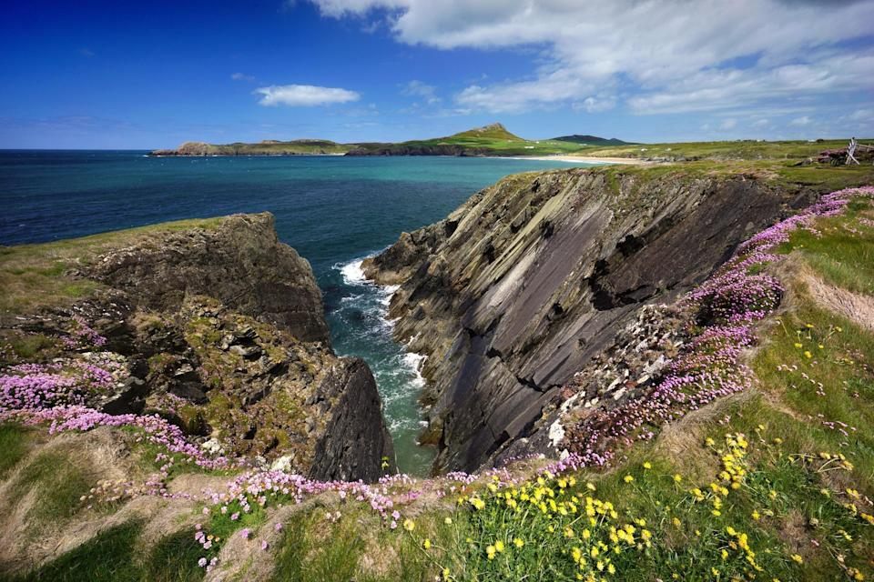Wildflowers on the cliffs of the Pembrokeshire Coast Path (Michael Roberts/Getty Images)