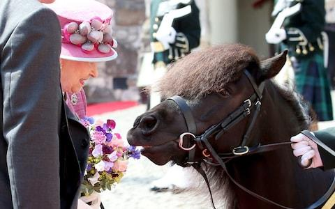Cruachan has nibbled Prince Harry's hand and the Queen's posy - Credit: Jane Barlow/PA Wire