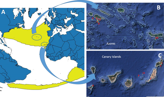 (A) Worldwide known distribution of True's beaked whales, and (B,C) locations of the reports included in the paper.