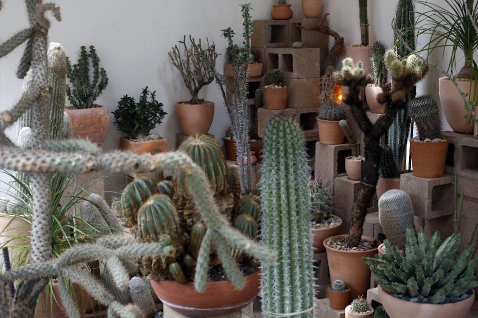 The Cactus Store in Echo Park sells desert-friendly plants.