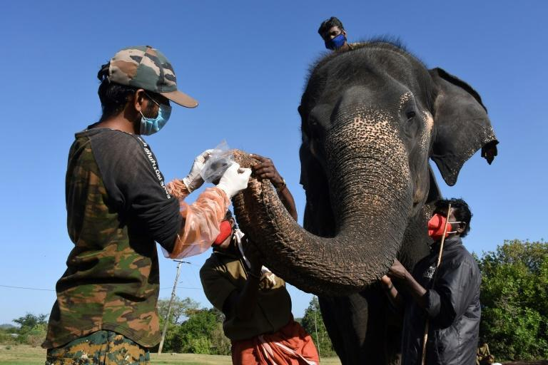 Elephants at a reserve in southern India have been tested for Covid-19 after a lion died of the virus