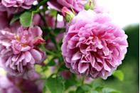 """<p>Peonies are a dramatic-looking flower, and that's part of why they're so beloved. Sometimes a single peony in a vase can be prettier than an entire bouquet. For best results, avoid overwatering and plant them in full sun.</p><p><a class=""""link rapid-noclick-resp"""" href=""""https://www.amazon.com/Indoor-Outdoor-Balcony-Decoration-Garland/dp/B08SHYWHTS/ref=sr_1_5?dchild=1&keywords=peony+seeds&qid=1620330649&sr=8-5&tag=syn-yahoo-20&ascsubtag=%5Bartid%7C10070.g.36355297%5Bsrc%7Cyahoo-us"""" rel=""""nofollow noopener"""" target=""""_blank"""" data-ylk=""""slk:Buy peony seeds."""">Buy peony seeds.</a></p>"""