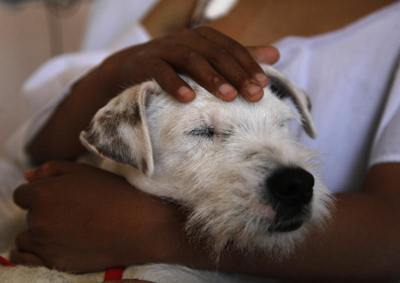 In this Aug. 8, 2012 photo, Parson Russell terrier named Juci is held by Samuel, a young patient at the SOLCA hospital in Quito, Ecuador. The dog's owner says her dogs are used every Wednesday to cheer up the most discouraged of the patients. Hospital workers began to notice that on Wednesdays fewer children had to be kept over because of problems after chemotherapy. Doctors found that youngsters' adrenaline levels rose from being with the dogs, boosting their resistance to chemo's side effects. (AP Photo/Dolores Ochoa)