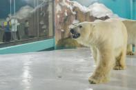 Polar bear is seen at an enclosure inside a hotel at a newly-opened polarland-themed park in Harbin