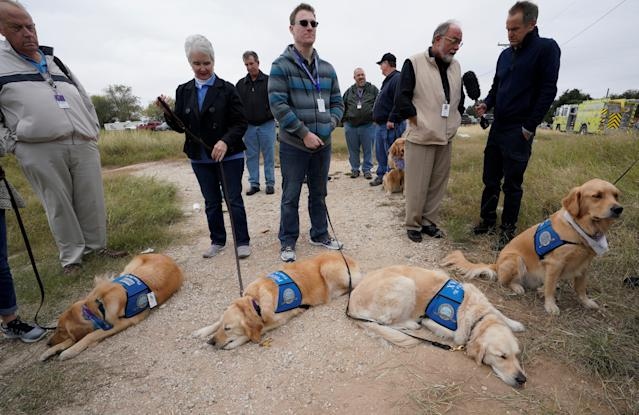 <p>Therapy dogs wait at the site of the First Baptist Church shooting in Sutherland Springs, Texas, Nov. 8, 2017. (Photo: Rick Wilking/Reuters) </p>