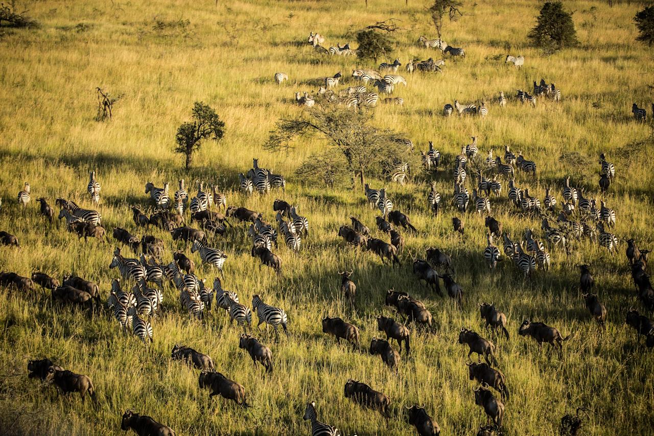 Getting as close as you possibly can to wild animals may be life-changing, but there's nothing like ascending into the air and taking them in all at once. It's recommended you make travel arrangements between July and October—that way you can hover over the Great Migration.