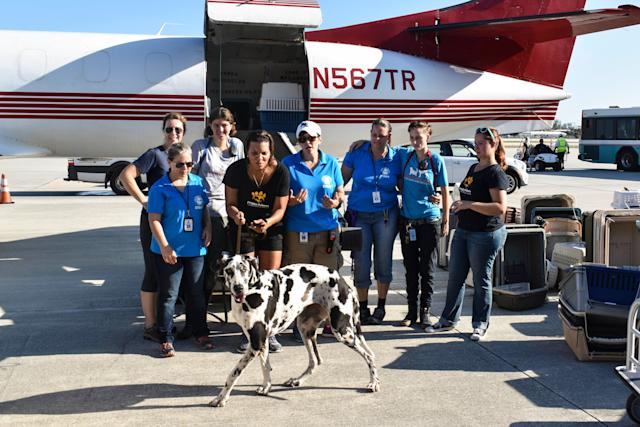 Donna, a Great Dane, is called over for a group shot in front of the plane.