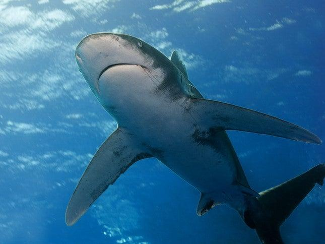 Tourist, 12, and guide lose limbs in shark attack in Egypt