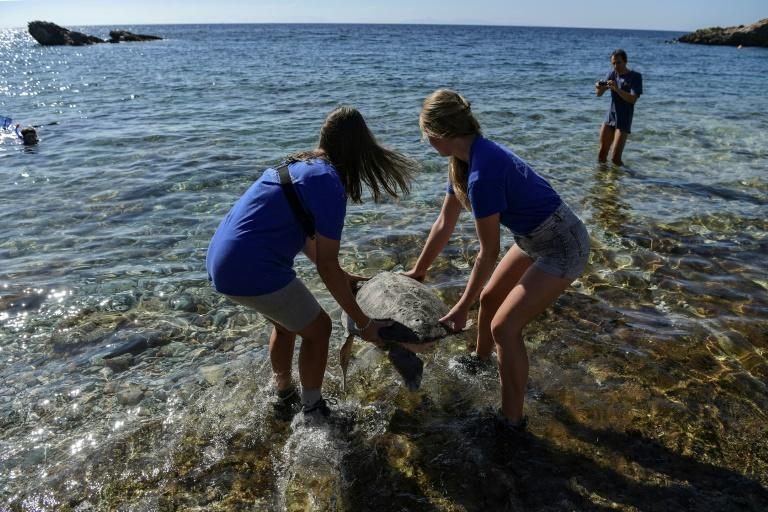 Volunteers on the beaches of Kyparissia Bay in Greece, the Mediterranean's largest nesting ground for the loggerhead, help the turtles on their way