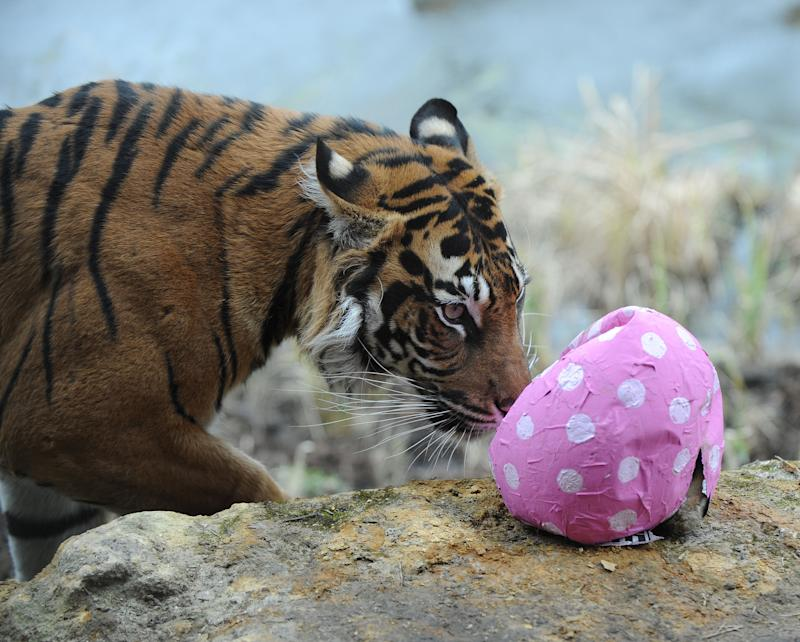 Melati playing with an Easter egg in 2013 (PA)
