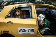 A dog is transported in the taxi driven by Nicolas Walteros, in the company of his pet Coronel using Santa's hats, amid the spread of the coronavirus disease (COVID-19) pandemic in Bogota