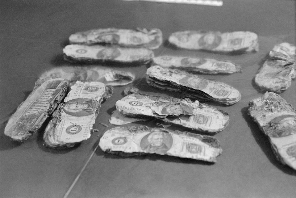 (Original Caption) The badly decomposed $20 dollar bills were shown to newsmen after check of their serial numbers showed that they were identical to the bills given to hijacker D.B. Cooper on November 24, 1971. The money was found by Brian Ingram, 8, who was searching for firewood while on a family outing with his parents, Mr. and Mrs. Harold Dwayne Ingram of Vancouver, Washington. The money was found on the north shore of the Columbia River, partially buried in the sand.
