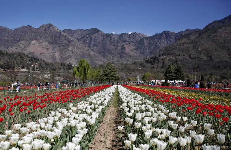 FILE PHOTO: Visitors walk inside Kashmir's tulip garden on the foothills of Zabarwan mountain range in Srinagar