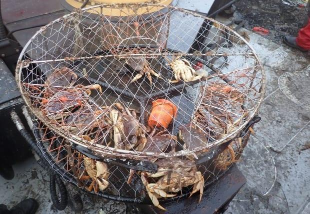 This illegal crab trap was seized earlier this year during a five-day, joint operation in Boundary Bay involving the Canadian Coast Guard and DFO.