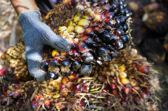 Produced mostly in Malaysia and Indonesia, palm oil causes three times more greenhouse gas emissions per unit of energy than diesel fuel, according to a recent analysis (AFP Photo/Chaideer Mahyuddin)