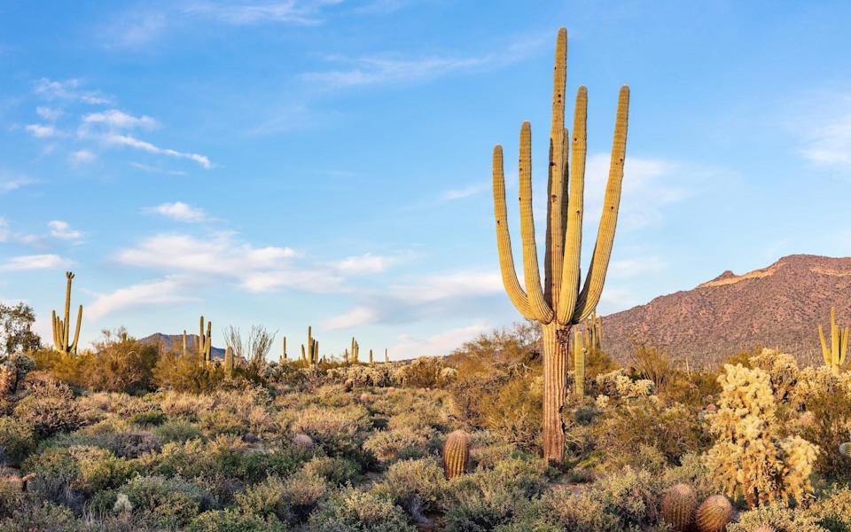 Welcome to the Wild West where the signature cacti reach 40ft tall - Getty