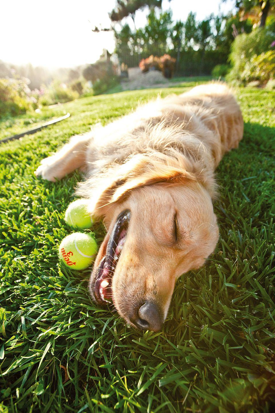 """<p>""""If loving tennis balls is wrong, I don't want to be right.""""<br></p>"""