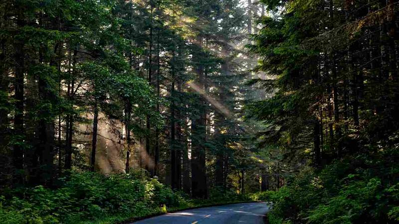 MaxPixel.freegreatpicture.com-Forest-Trees-Shaft-Of-Light-Sunlight-Woods-1598756 (1)