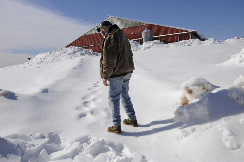 In the Friday, Feb. 4, 2011 photo, Joe Greenbacker, a partner at Brookfield Farm, looks back at collapsed hoop barn on his farm while walking up a steep snowy hill to his dairy barn in Durham, Conn.  The barn collapsed under the weight of snow killing one calf. Connecticut agriculture officials say back-to-back snowstorms and a recent ice storm have brought down the roofs of more than 130 barns, greenhouses, equipment buildings and other farm buildings. More than a dozen dairy cows, two horses and a calf have been killed in building collapses. (AP Photo/Jessica Hill)