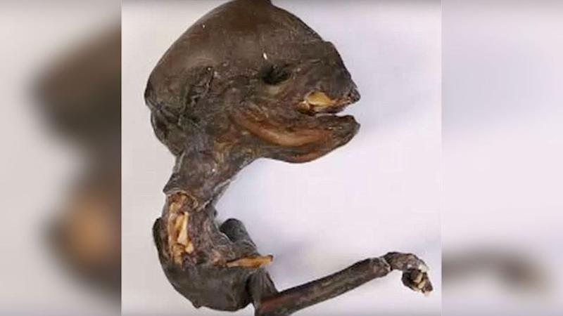 What is this creepy creature? Could it be ET or a mutant chicken embryo? Photo: Supplied
