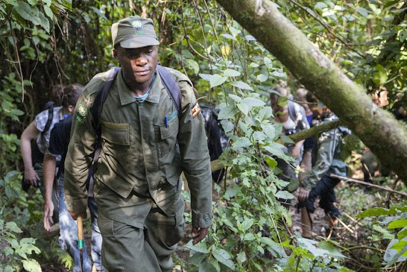 A ranger guides a group of tourists through Bwindi Impenetrable National Park, in Uganda, on May 24, 2014, as they go gorilla trekking (AFP Photo/Emmanuel Leroux-Nega)