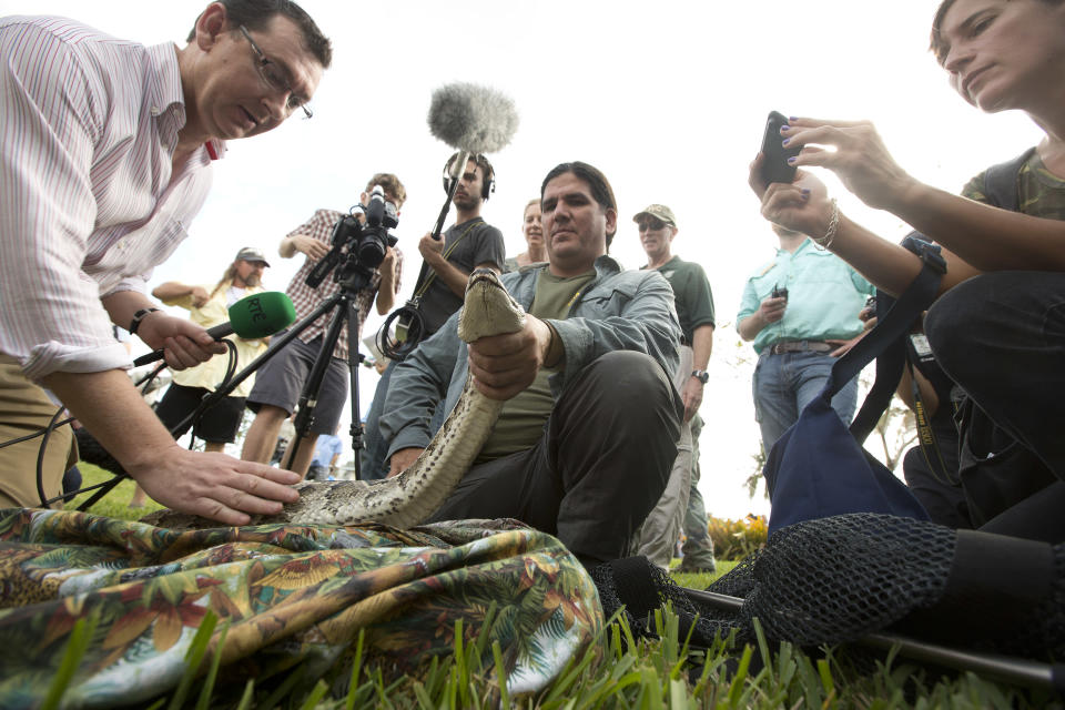 """TV crews pet and take photos as Capt. Jeff Fobb from the Miami-Dade Fire Rescue's Venom Response Unit, holds a python during the kick-off ceremonies for the Florida Fish and Wildlife Conservation Commission's month-long """"Python Challenge"""" in Davie, Fla. on Saturday, Jan. 12, 2013. The 13-foot reptile was captured in a backyard swimming pool in 2012. (AP Photo/J Pat Carter)"""