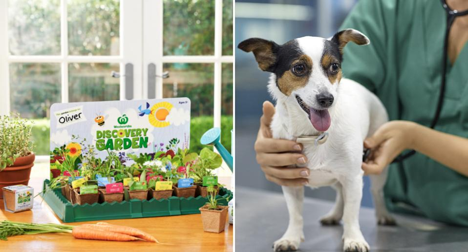 Woolworths Discovery Garden seedlings that can be toxic to dogs and cats.