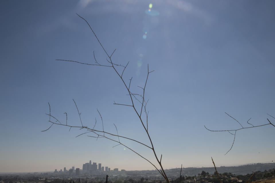 FILE - In this Sunday, July 4, 2021 file photo, the Los Angeles cityscape is seen behind dry plants in Los Angeles. While droughts are common in California, this year's is much hotter and drier than others. (AP Photo/Kyusung Gong)