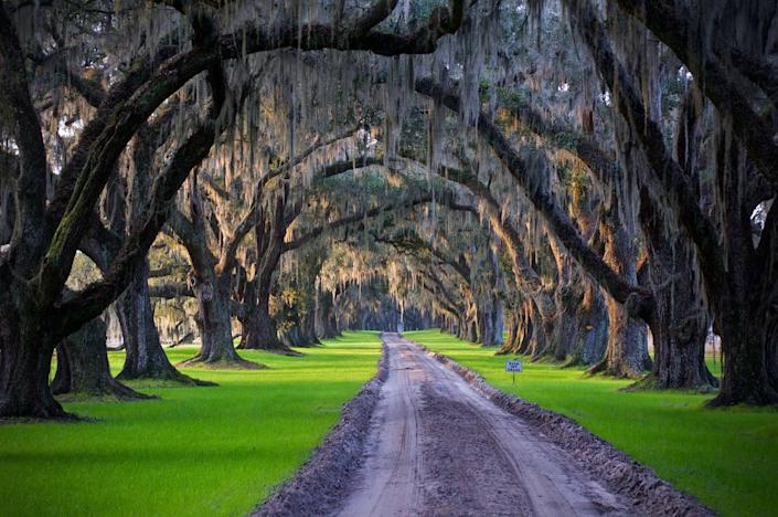 The entrance to Tomotley Plantation lined by Live Oaks, which sold for $7.9 million.