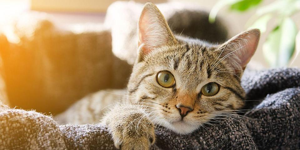 Nine Signs Your Cat Loves You