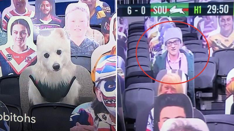 Photos of hilarious images of dogs (pictured left) and UK politician Dominic Cummings (pictured right) used as part of the NRL cardboard crowd initiate.
