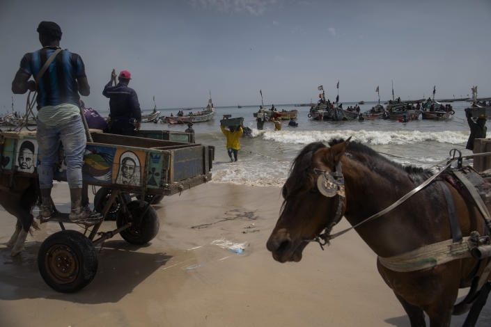 Men wait to load their horse-drawn carts with the catch brought by fishermen at Bargny beach, some 35 kilometers (22 miles) east of Dakar, Senegal, Thursday April 22, 2021. In Bargny and other coastal villages of Senegal, traditional fishing and processing of the catch is a livelihood and a pride. Methods have been passed down through generations. Women work as processors — drying, smoking, salting and fermenting the catch brought home by men. (AP Photo/Leo Correa)