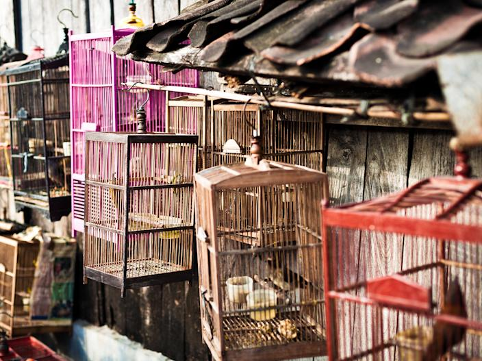 File image: Birds in cage in an Indonesian market (Getty Images/iStockphoto)
