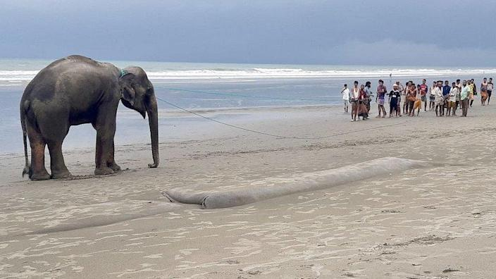 Villagers gather at a beach to lead a wild Asian elephant, believed to have entered Bangladesh from Myanmar by wading a river, near Bangladesh's southern coastal town of Teknaf. June 29, 2021