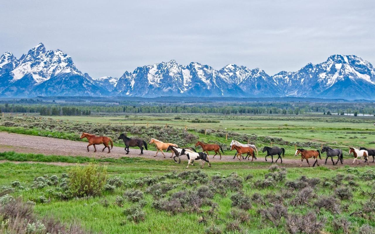 """<p><a href=""""https://www.nps.gov/grte/index.htm"""">Grand Teton National Park</a> was the couple's favorite national park to visit because of its stunning scenery, amazing wildlife, and proximity to Jackson. The Hahnels said watching the sunrise light up the mountains from their campsite was one of the most memorable moments from their trip.</p>"""
