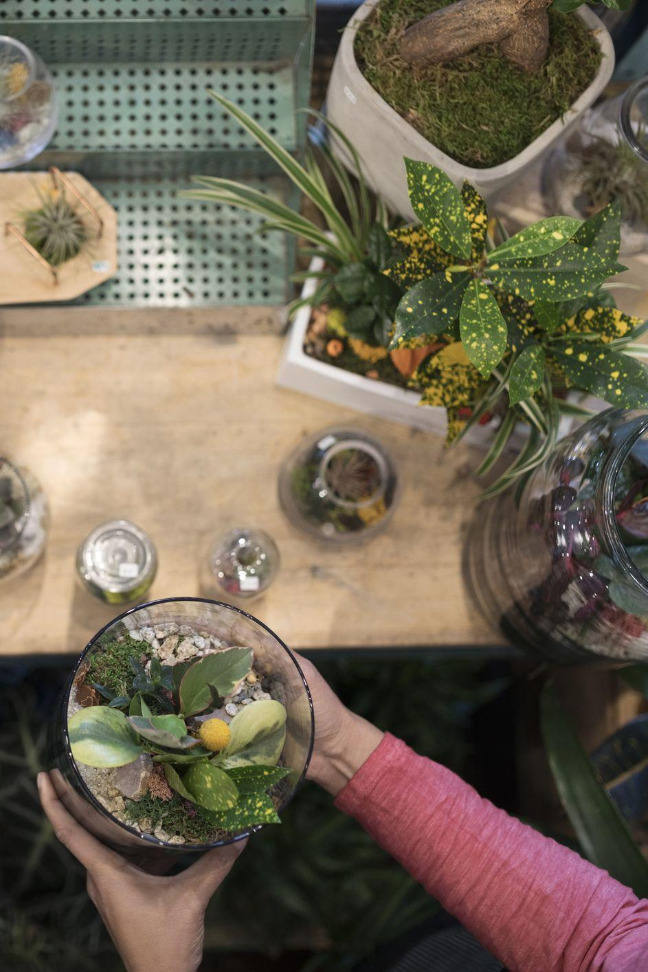 """<p>Lastminute.com - £60.00</p><p>Love booze? Got green fingers? Why not combine the two? On this workshop you'll learn how to design the little garden, the soil, the drainage, how to get your plants thriving, as well as aftercare and top tips to keep your plants healthy. After the demo is done, you'll learn how to make your own. Everything you need will be provided on the day.<br></p><p><a class=""""link rapid-noclick-resp"""" href=""""https://experiences.lastminute.com/terrarium-workshop-with-prosecco?acntb=brand&COBRANDED=LMNUK_AWINCOUK&awc=4329_1541087017_1c520591a203137b24a065fda7405578&dclid=CjkKEQjwyOreBRCIyoGa4ua41v4BEiQATX0Y8ZKYGPUmGWDxA_27HLhYoPVkTk2er5WrUDIyPja6igTw_wcB"""" rel=""""nofollow noopener"""" target=""""_blank"""" data-ylk=""""slk:SHOP NOW"""">SHOP NOW</a> </p>"""