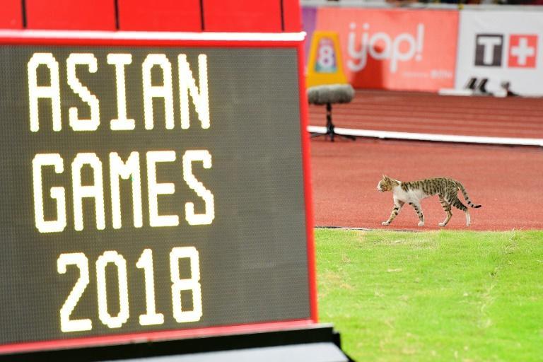 A cat made an unexpected appearance at the Asian Games athletics
