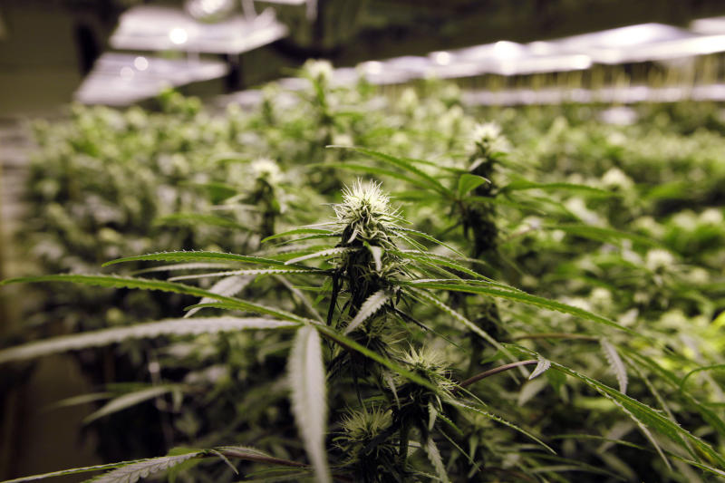 Pot votes in CO, WA raise specter of weed tourism