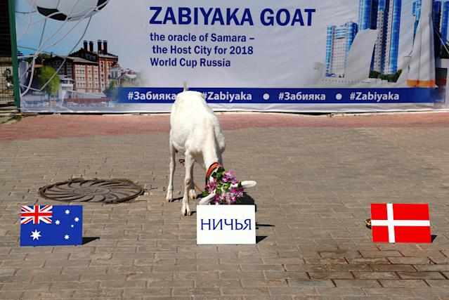 A goat named 'Zabiyaka - the Oracle Goat of Samara' eats a plate of food behind a sign in Russian meaning 'Draw' during an event at a zoo in the Russian city of Samara, June 19, 2018, ahead of the Group C match between Denmark and Australia. REUTERS/David Gray