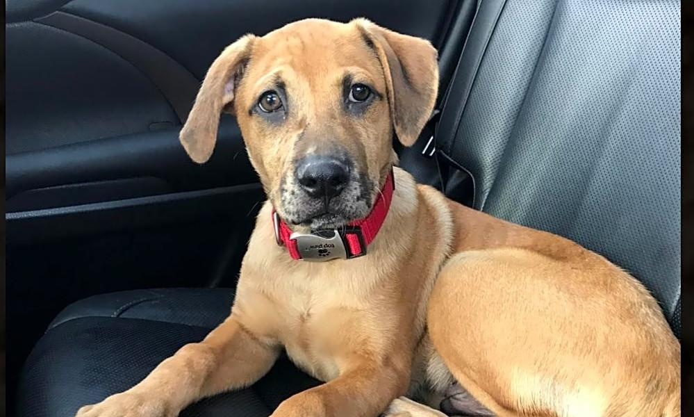 6 adorable pups to adopt now in Minneapolis