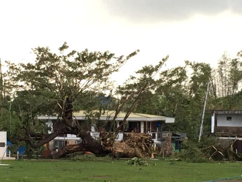 Fallen trees are seen after Typhoon Phanfone swept through Tanauan, Leyte, in the Philippines