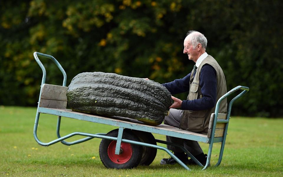 Heavyweight: a prize-winning marrow at the Harrogate Autumn Flower Show in 2017 - AFP/Getty